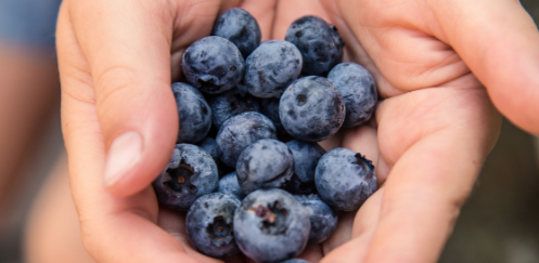 logo- Blueberries hands